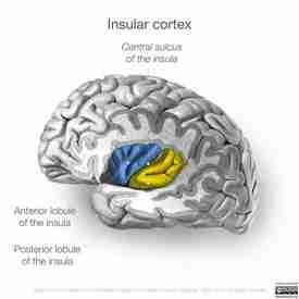 What causes bipolar disorder
