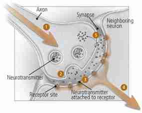 Viibryd: A New Antidepressant