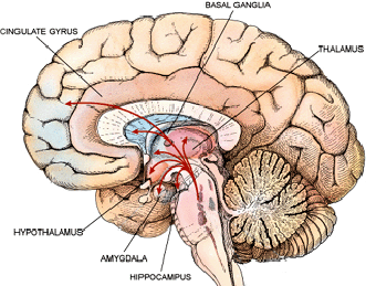 Amygdala in Anxiety and Depression