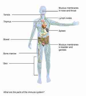 Immune system and depression