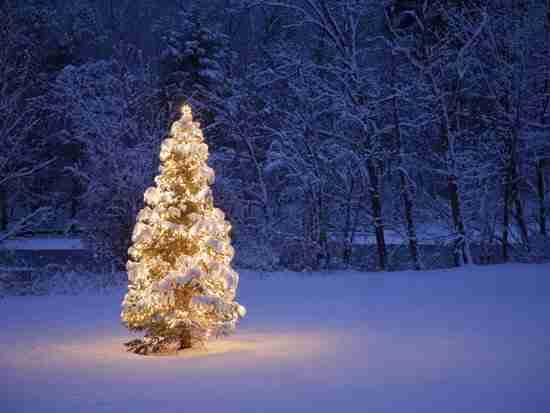 i want to like christmas