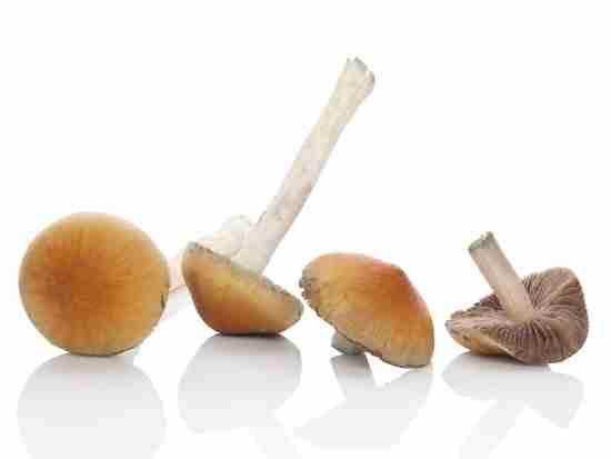 mushrooms for depression